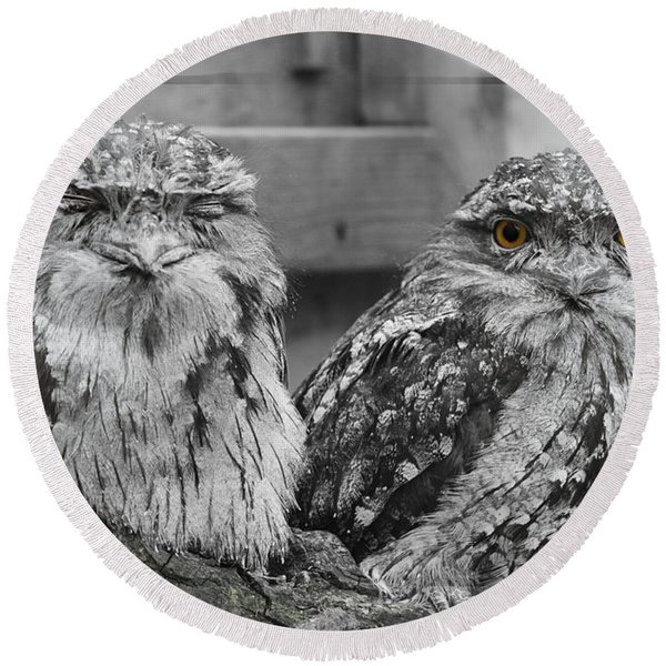 Tawney Frogmouths Round Beach Towel