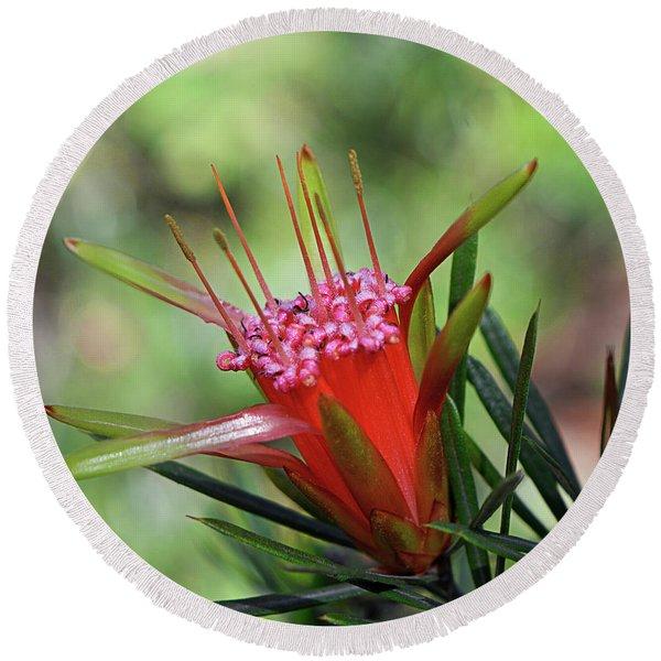 The Mountain Devil - Australian Native Flower Round Beach Towel