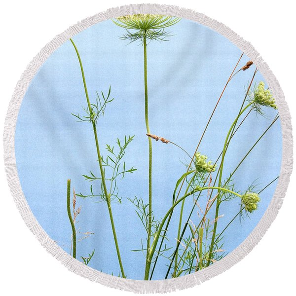 Tuft Of Queen Anne's Lace Round Beach Towel
