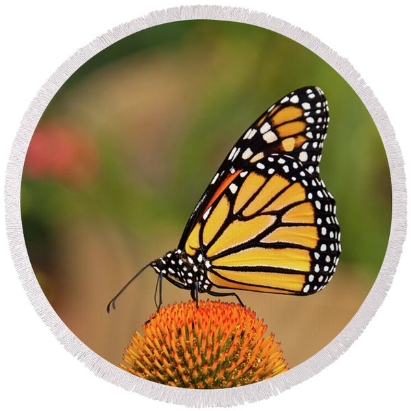 Monarch Butterfly On A Purple Coneflower Round Beach Towel