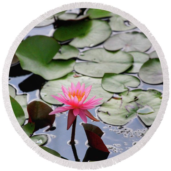 Water Lily In The Pond Round Beach Towel