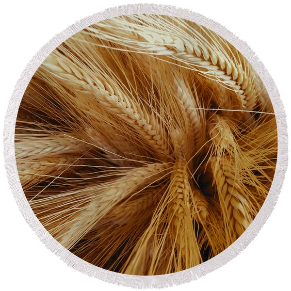 Wheat In The Sunset Round Beach Towel
