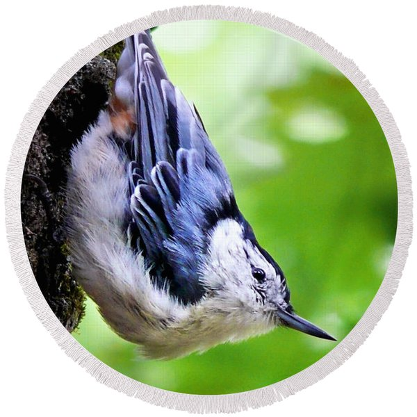 White Breasted Nuthatch Round Beach Towel