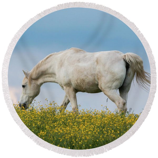 White Horse Of Cataloochee Ranch 2 - May 30 2017 Round Beach Towel