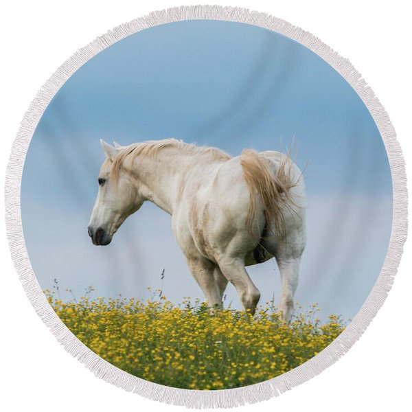 White Horse Of Cataloochee Ranch - May 30 2017 Round Beach Towel