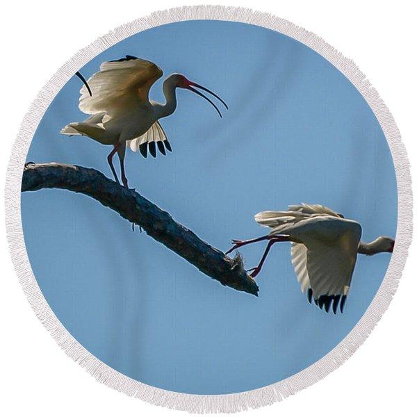 White Ibis Takeoff Round Beach Towel