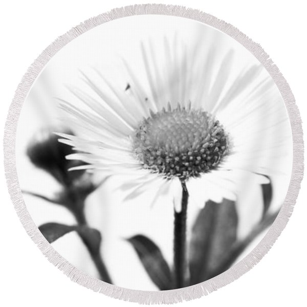 Wildflower In A Wine Glass Black And White Round Beach Towel