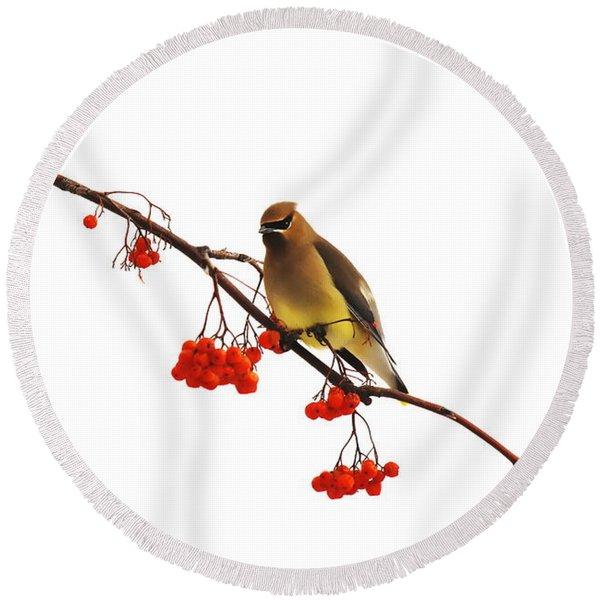 Winter Birds - Waxwing  Round Beach Towel