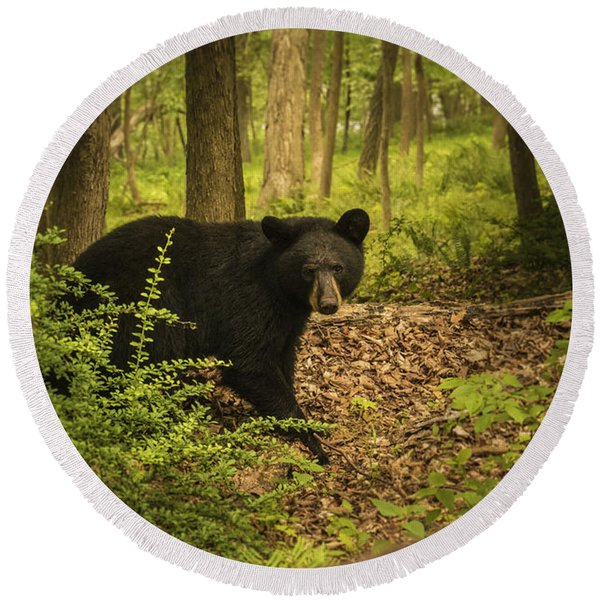 Yearling Black Bear Round Beach Towel