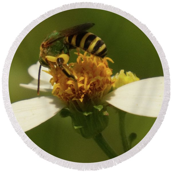 Yellow And Black Bee On Flower. Round Beach Towel