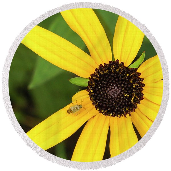 Yellow Petaled Flower With Bug Round Beach Towel