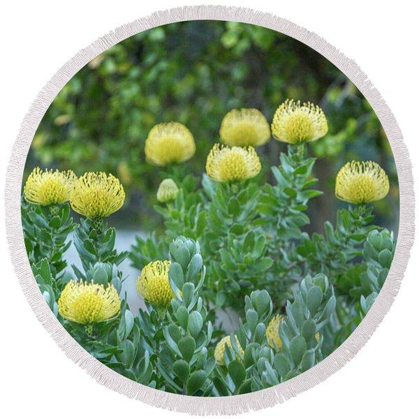 Yellow Pincushion Protea Round Beach Towel
