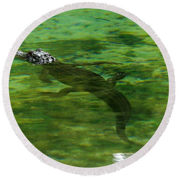 Young Alligator Round Beach Towel