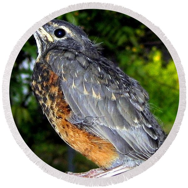 Young American Robin Round Beach Towel
