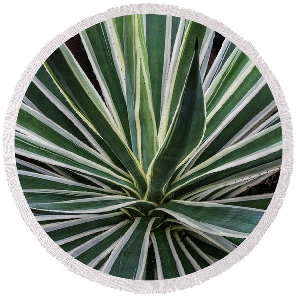 Round Beach Towel featuring the photograph Yucca Whirl by Lon Dittrick