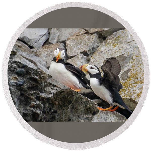 Horned Puffin Pair 2 Round Beach Towel