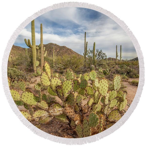 Round Beach Towel featuring the photograph Prickly Pear Patch In The Early Evening. by Lon Dittrick