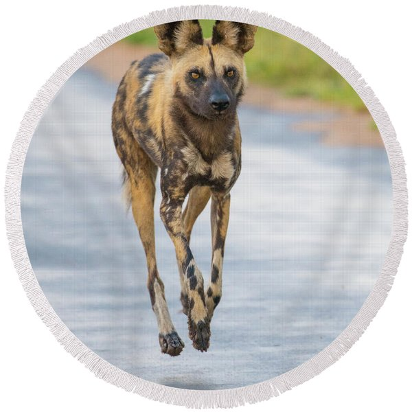 African Wild Dog Bouncing Round Beach Towel