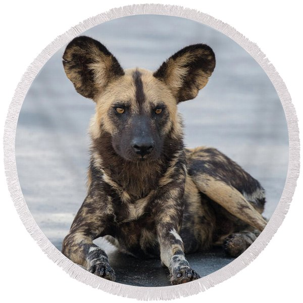 African Wild Dog Resting On A Road Round Beach Towel