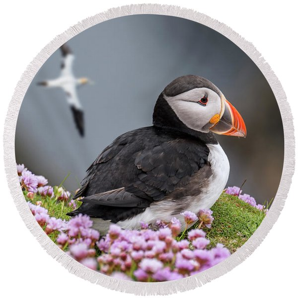 Atlantic Puffin And Soaring Gannets Round Beach Towel