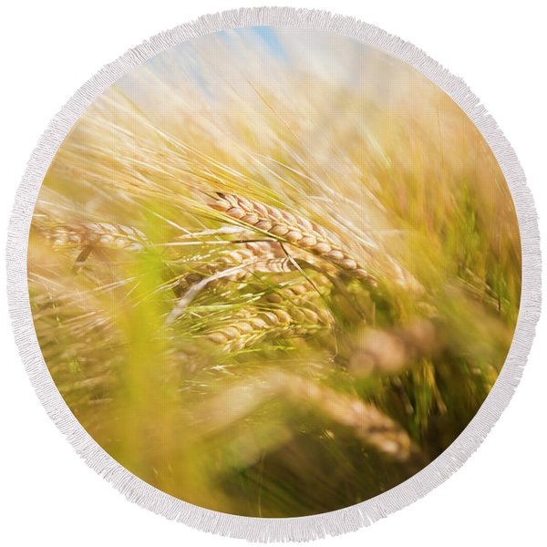 Background Of Ears Of Wheat In A Sunny Field. Round Beach Towel
