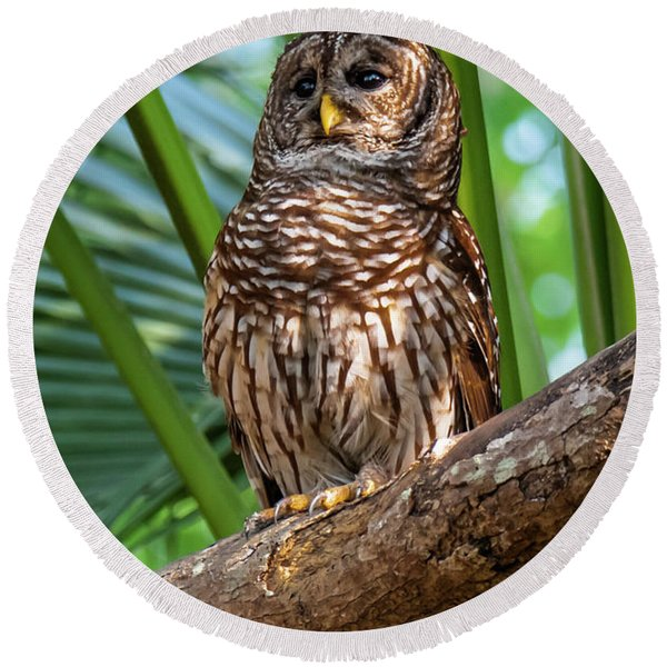 Barred Owl On Perch Round Beach Towel
