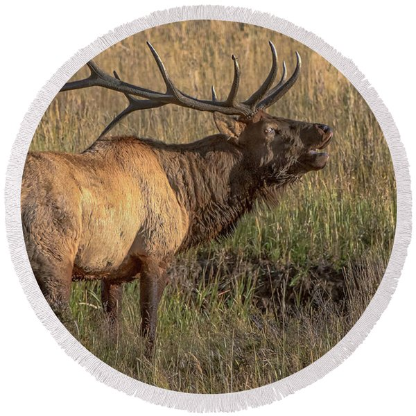 Bugling Bull Elk 7777 Round Beach Towel
