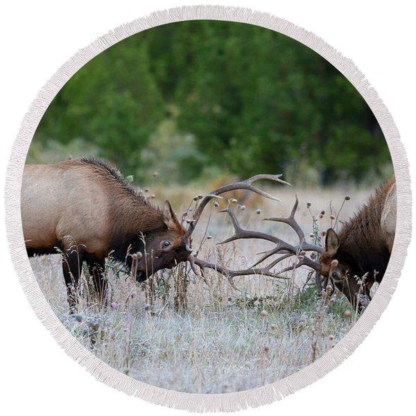 Bull Elk Battle Rocky Mountain National Park Round Beach Towel