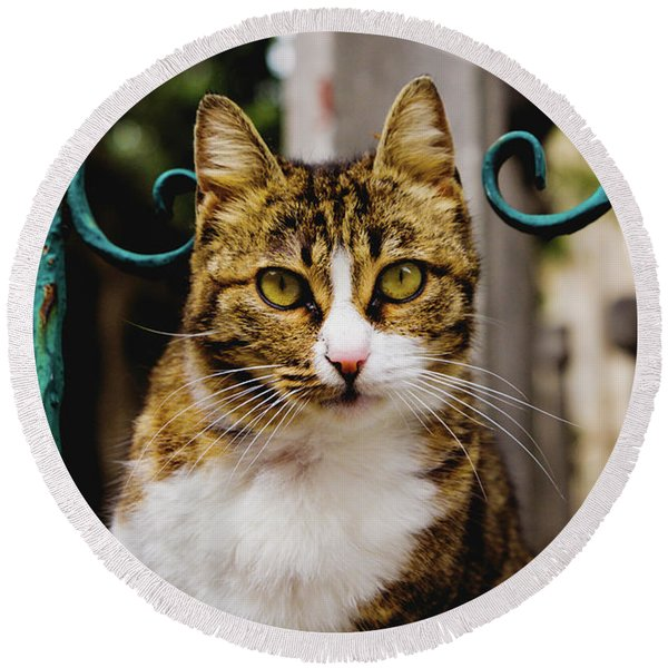 Cat On A Fence Round Beach Towel