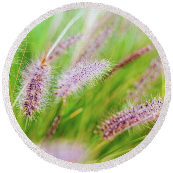 Colorful Flowers In Purple Spikes, Purple Fountain Grass, Close- Round Beach Towel