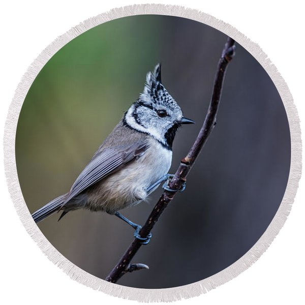 Crested Tit On A Twig Round Beach Towel