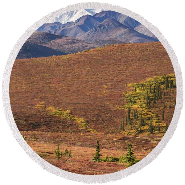 Round Beach Towel featuring the photograph Denali Grizzly by Tim Newton