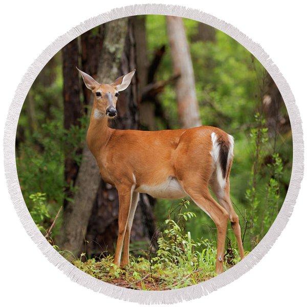 Doe, A Deer, A Female Deer Round Beach Towel