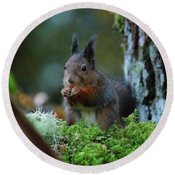 Eating Squirrel Round Beach Towel