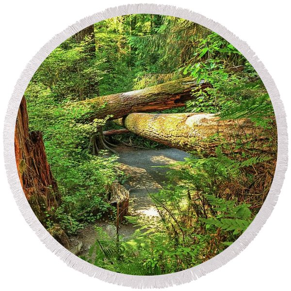 Fallen Trees In The Hoh Rain Forest Round Beach Towel