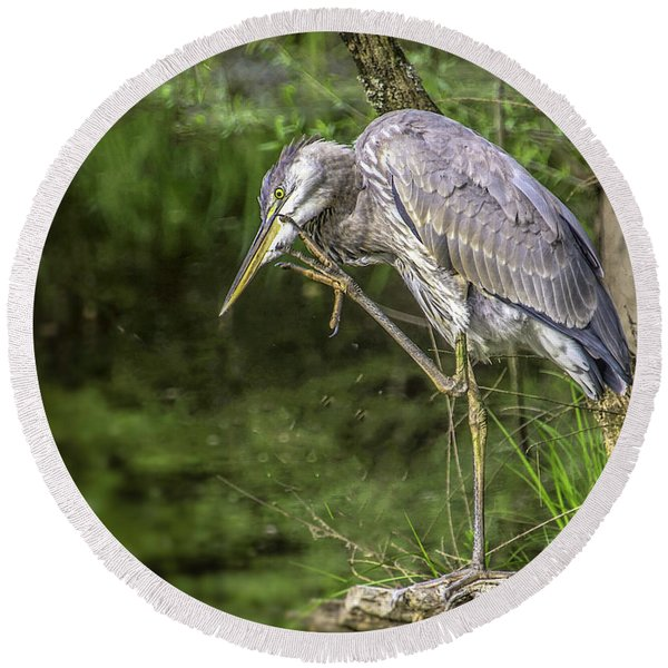 Great Blue Heron Itch Round Beach Towel