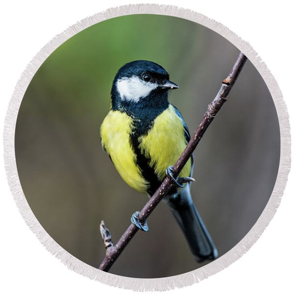 Great Tit Perching On The Twig Round Beach Towel