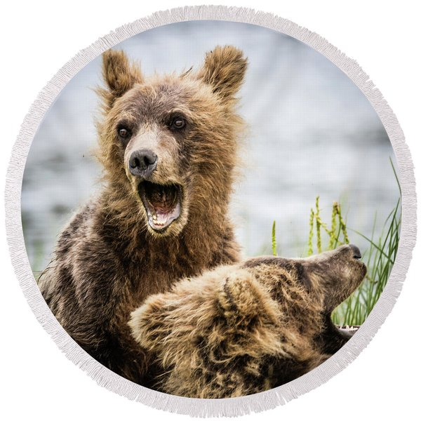 Grizzly Cubs Looking For Their Mum Round Beach Towel