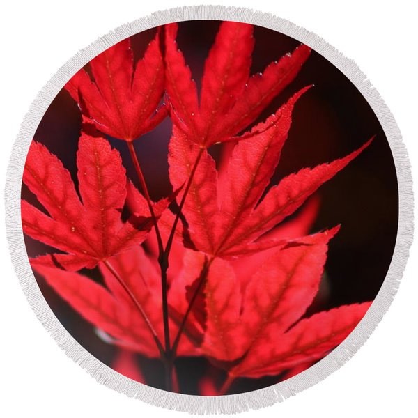 Guardsman Red Japanese Maple Leaves Round Beach Towel