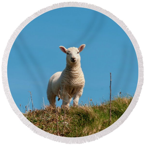 Hebridean Lamb Round Beach Towel