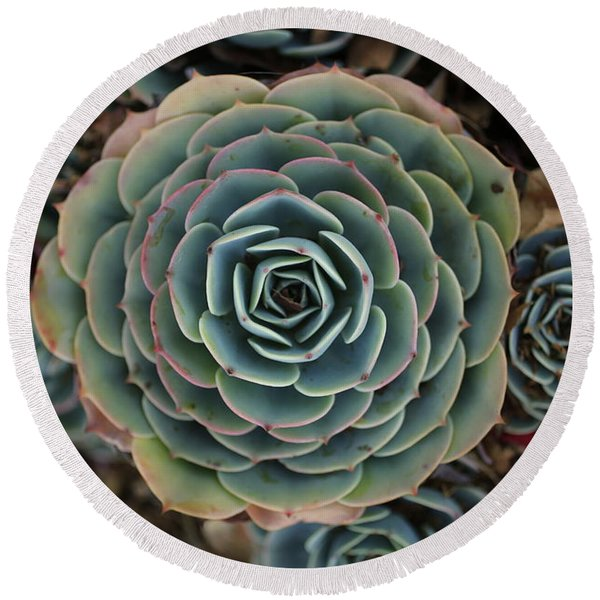 Hen And Chicks Succulent Round Beach Towel