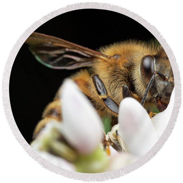Honeybee Peeking Round Beach Towel