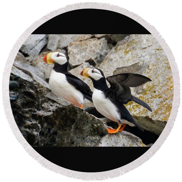 Horned Puffin Pair Round Beach Towel