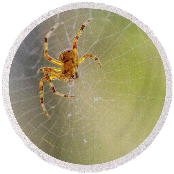 Itsy Bitsy Spider Round Beach Towel