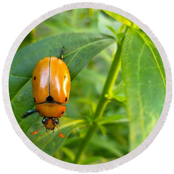 Round Beach Towel featuring the photograph June Bug by Carl Young