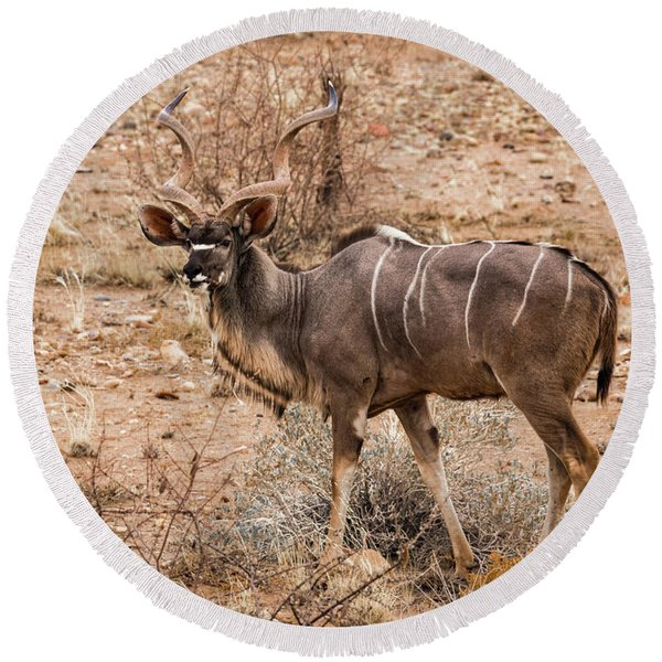 Kudu In The Kalahari Desert, Namibia Round Beach Towel