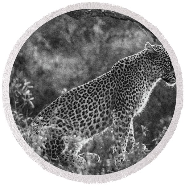 Leopard Sitting Black And White Round Beach Towel
