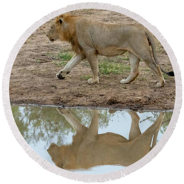 Male Lion And His Reflection Round Beach Towel