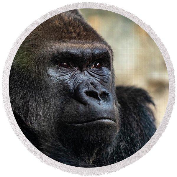 Male Western Gorilla Looking Around, Gorilla Gorilla Gorilla Round Beach Towel