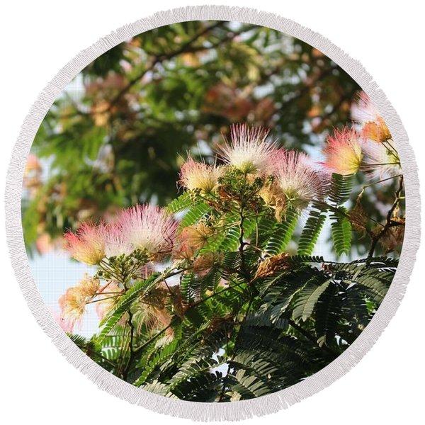 Mimosa Tree Flowers Round Beach Towel